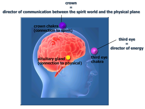 Crown-Third-Pituitary